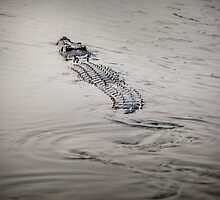 Yellow Water Crocodile by Russell Charters
