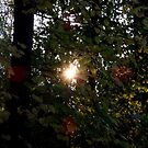 Sunset through the forest by Rivendell7