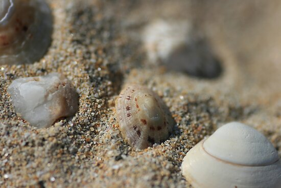 Shells, Sand & Pebbles by Justine Humphries