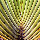 Palm tree leaf by Walter Quirtmair
