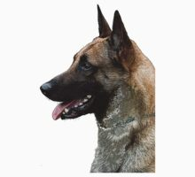 belgian shepherd Malinois by rkss