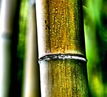Big Bamboo by Bob Wall