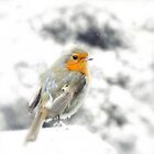 Snowy Robin by Claudia Dingle