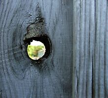 Peephole by NervousNellie