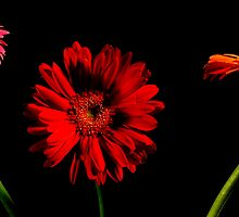 Pushing up Daisies by Sharon Ulrich