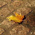 Autumn. by Clare Bentham