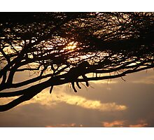 Leopard At Sunset Photographic Print