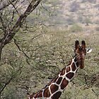 Inquisitive Giraffe  by Jemma Assender