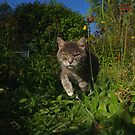 Tabby cat hunting in garden by turniptowers