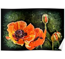 Oriental Poppies family Poster