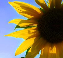 Sunniest Sunflower by shall