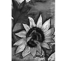 Oil Sunflower 2 Black and White  Photographic Print