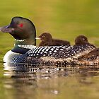 Once around the lake please - Common Loon by Jim Cumming