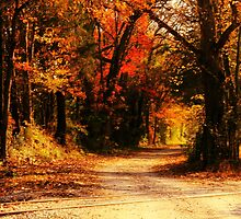 Fall on Glenner Road by ArdenBryant