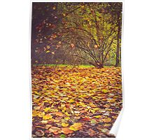 Autumn leaves and shrub Poster
