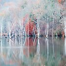 White Trees in Fog by Mary Ann Reilly