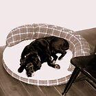 Docile Dog by Kodak