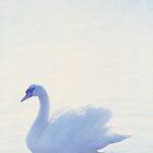 Swan, white on white. by watermark
