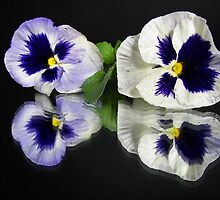 Fancy Pansy by Maria Dryfhout