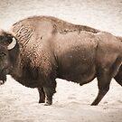 Vintage Buffalo by brotbackgeraet
