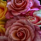 Roses by Nicole W.
