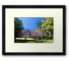 Two Pink Cherry Blossom Trees Framed Print