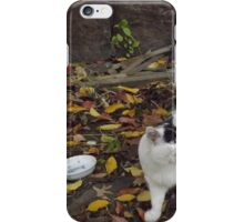 Cat Portrait, Brunswick Community Garden, Jersey City iPhone Case/Skin