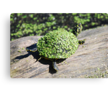 The Duckweed Sweater Canvas Print