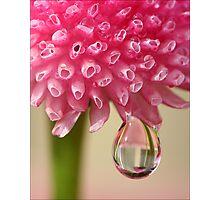 Morning Rain Drop Photographic Print