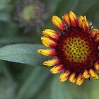 Ready To Bloom by heatherfriedman