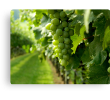 Vineyard View   ^ Canvas Print
