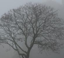 Foggy Morning Tree Sticker