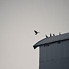 Queenscliff Cormorants by Marcel Lee