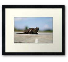 Little Spike Framed Print
