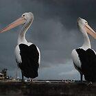 Unfriendly Pelicans by Mark Whittle
