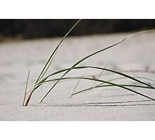 sand grass Photographic Print