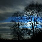 THE WINTER TREES by leonie7