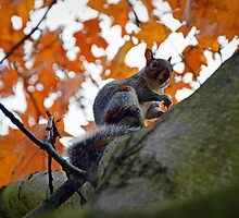Squirrel on Tree by mouchette111