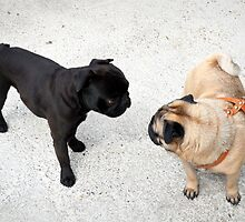 Two Pugs by mouchette111