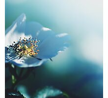 turquoise - like a dream, no 1  Photographic Print