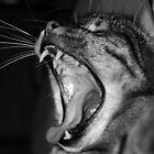 SCREAM by philwells