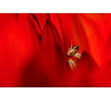 Mantis in Red Photographic Print