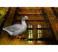 Goosy Goosy Gander Whither shall I wander Photographic Print