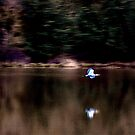 Heron in flight abstract by Jeffrey  Sinnock