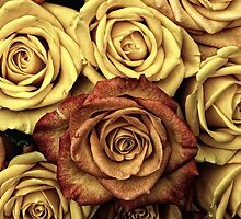 Blooming Roses, Flowers, Petals - Yellow Red by sitnica