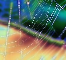 rainbow web by justjulie