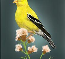 Finch by Kayla G. Webster