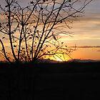 Pecan Sunset by Jennifer Mayo
