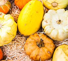 colorful autumn pumpkins on the market by Stanciuc