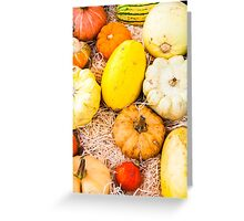 colorful autumn pumpkins on the market Greeting Card